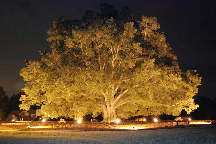Landscape Lighting Outdoor Contracting Charlotte